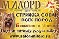 Сеть салонов для собак «Милорд». Нам 9 лет! 5 салонов в Москве. Стрижка собак всех пород, гигиенический уход. Подари питомцу уход и заботу. www.salon-milord.ru